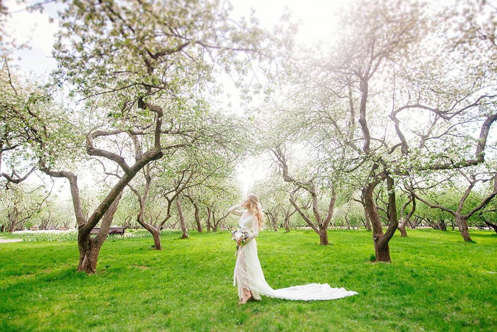 Картинка псд цветет яблоня